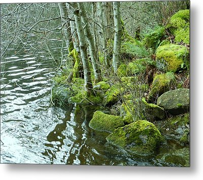 Metal Print featuring the photograph Where The Fairies Hang Out by Karen Molenaar Terrell