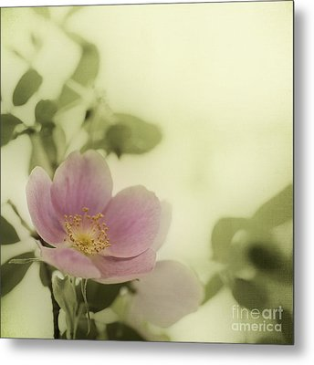 Where The Wild Roses Grow Metal Print by Priska Wettstein