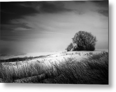 Where The Wild Winds Blow Metal Print