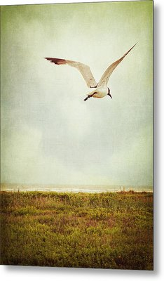 Where To Go? Metal Print by Trish Mistric
