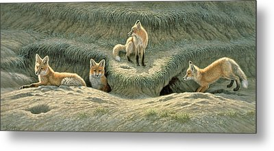 Where's Mom-fox Pups Metal Print by Paul Krapf
