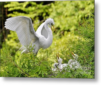 Where's Our Lunch Ma Metal Print