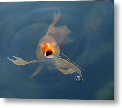 Where's The Food Metal Print by Laurel Powell