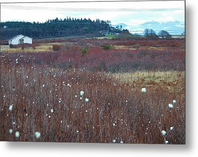 Whidbey Island  Metal Print by Shannon Lee