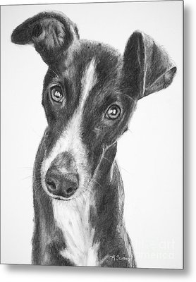 Whippet Black And White Metal Print