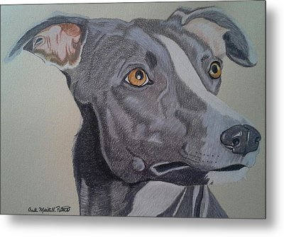 Whippet - Grey And White Metal Print