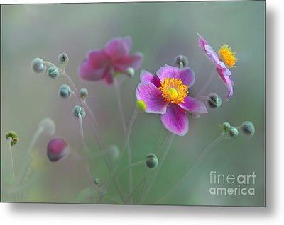 Whisper Metal Print by Elaine Manley