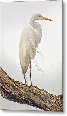 Whispering Wind Metal Print by Donnie Smith
