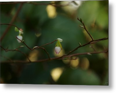 Metal Print featuring the photograph Whispers Of Spring In The Tranquil Forest by Lisa Knechtel