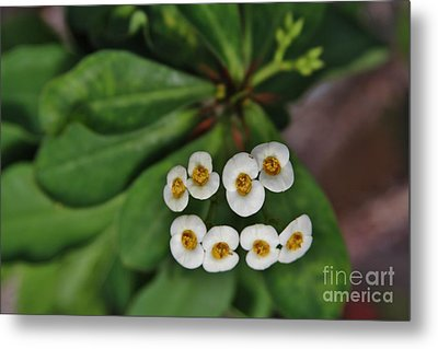 White 8 Metal Print by Butch Phillips