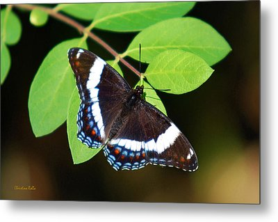 White Admiral Butterfly Metal Print by Christina Rollo