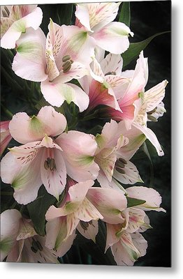 Metal Print featuring the photograph White And Pink Peruvian Lilies by Diane Alexander