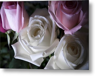 White And Pink Roses Metal Print