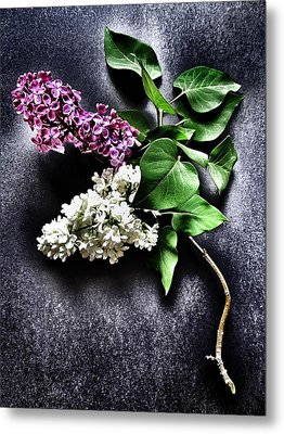 White And Purple Lilacs Metal Print by Marianna Mills