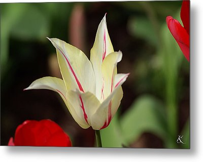 White And Red Flower Metal Print