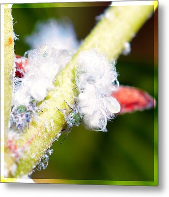 White Aphids  Metal Print by Tommytechno Sweden