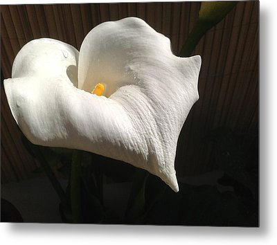 White Beauty Metal Print by Janina  Suuronen