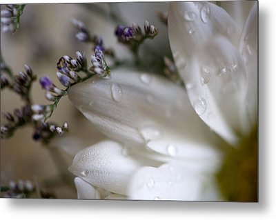 White Beauty Metal Print by John Holloway