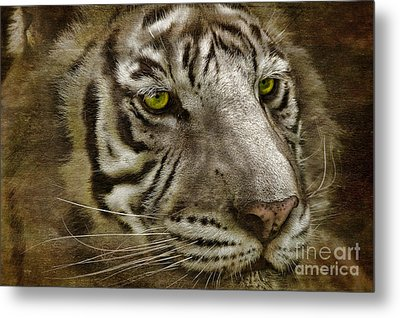 White Bengal Metal Print by Lois Bryan
