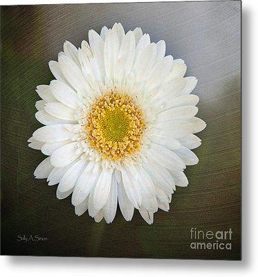 White Bergera Daisy 1 Metal Print by Sally Simon