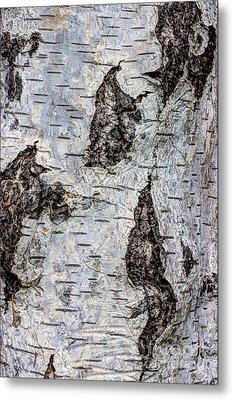 White Birch Abstract  Metal Print by Heidi Smith