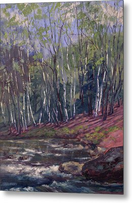 White Birches On Otter Brook Metal Print