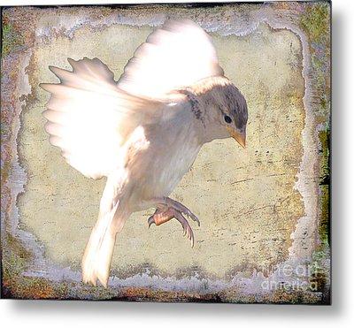 White Bird Metal Print by Jim Wright