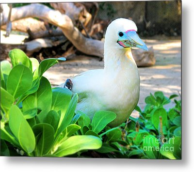 Metal Print featuring the photograph White Bird by Kristine Merc