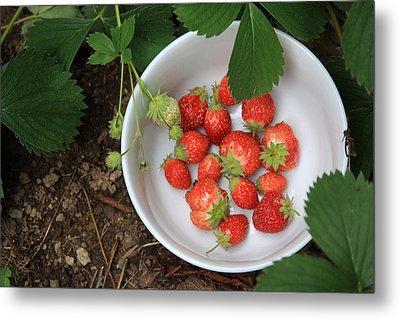 White Bowl With Strawberries Metal Print
