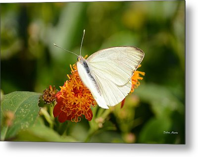 White Butterfly On Mexican Flame Metal Print by Debra Martz