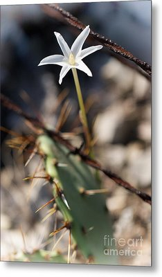 Metal Print featuring the photograph White Cactus Flower by Erika Weber