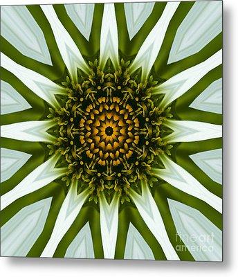 White Coneflower Mandala 12 Metal Print by Carrie Cranwill