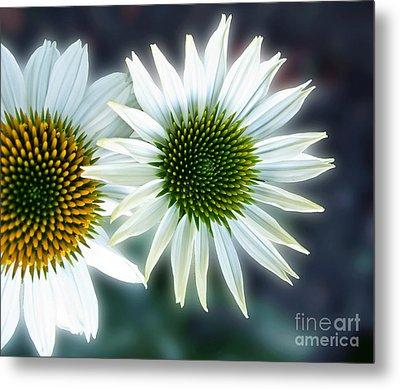 White Conehead Daisy Metal Print by Arlene Carmel