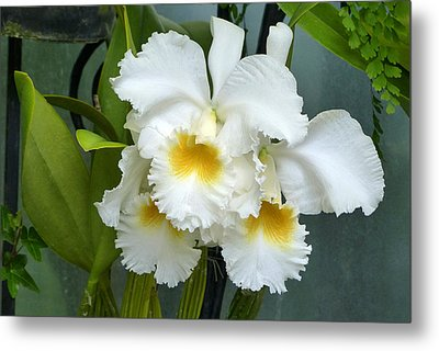 Metal Print featuring the photograph White Corsage Orchid Trio by Cindy McDaniel