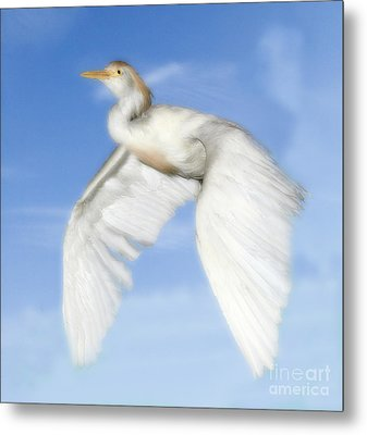 White Crane Metal Print by Raymond Earley