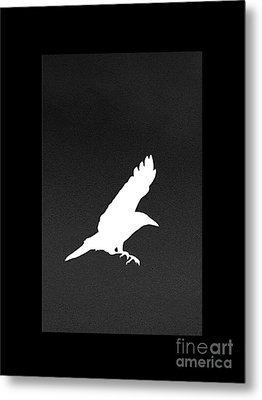 White Crow Metal Print by Linsey Williams