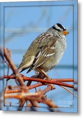 Metal Print featuring the photograph White Crowned Sparrow by Heidi Manly