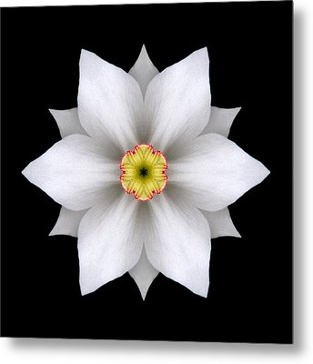 White Daffodil II Flower Mandala Metal Print by David J Bookbinder