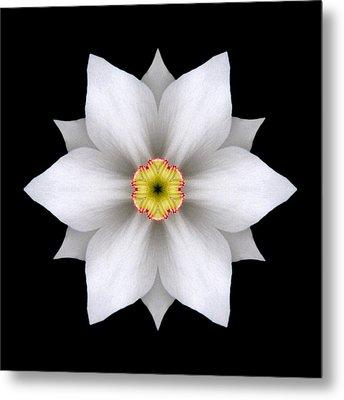 White Daffodil II Flower Mandala Metal Print