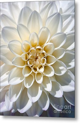 Metal Print featuring the photograph White Dahlia by Carsten Reisinger