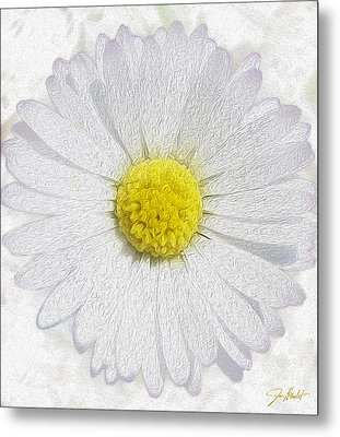 White Daisy On White Metal Print by Jon Neidert