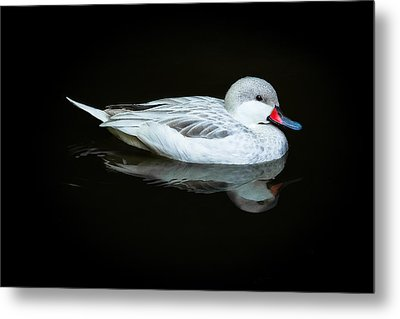 White Duck Metal Print