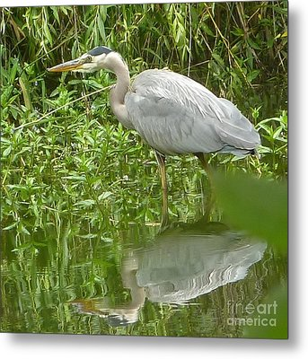 Metal Print featuring the photograph White Egret Double  by Susan Garren
