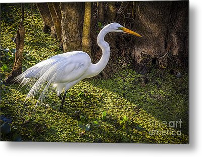 White Egret On The Hunt Metal Print