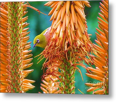 White-eye On Deer-horn Metal Print by Michele Penner