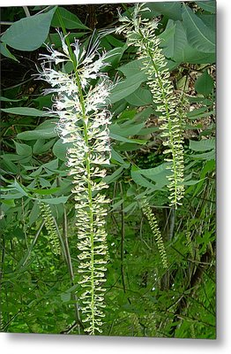 White Fern Metal Print by Aimee L Maher Photography and Art Visit ALMGallerydotcom