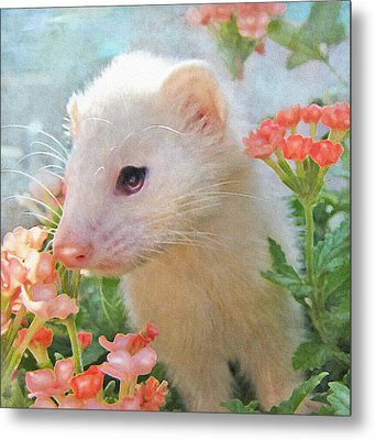 White Ferret Metal Print by Jane Schnetlage