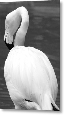 White Flamingo Metal Print