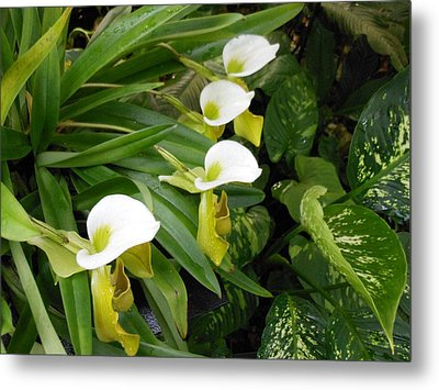 White Flower Array Metal Print by Kay Gilley