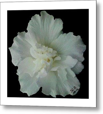 White Flower By Saribelle Rodriguez Metal Print by Saribelle Rodriguez